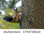 Squirrel Casually Standing On A ...