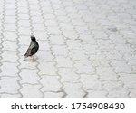 Bird Starling Sits On Paving...
