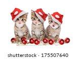 christmas  three kitten with... | Shutterstock . vector #175507640