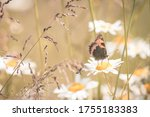 Speckled Wood Butterfly On A...