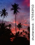palm trees in a tropical sunset | Shutterstock . vector #175543910