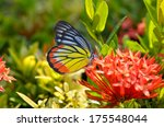close up of the plain tiger... | Shutterstock . vector #175548044