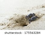 Ghost Crabs Fight About...