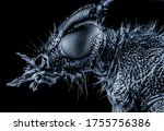 Insect Macro Supermacro...