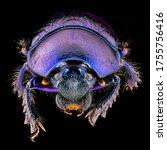 insect macro supermacro...   Shutterstock . vector #1755756416