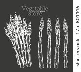 hand drawn asparagus... | Shutterstock .eps vector #1755801146