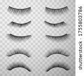 false eyelashes set  make up...   Shutterstock .eps vector #1755803786