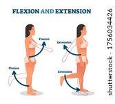 flexion and extension vector... | Shutterstock .eps vector #1756034426