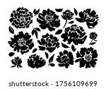Roses  Peonies  Chrysanthemums...