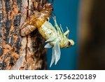 Beautiful Scene Macro Insect...
