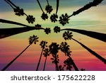 california palm trees view from ...   Shutterstock . vector #175622228