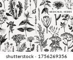 hand drawn medicinal herbs... | Shutterstock .eps vector #1756269356