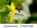 bee in flower  | Shutterstock . vector #175637180