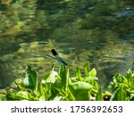 Damselflies Are Insects Of The...