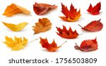 Isolated Leaves. Collection Of...