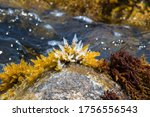 close up of a crystal seaweed.... | Shutterstock . vector #1756556543