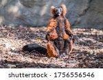 portrait of a funny brown lemur ... | Shutterstock . vector #1756556546