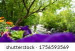 Flowers And River In...