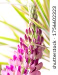 macro lupines fresh and vibrant ... | Shutterstock . vector #1756602323