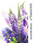 macro lupines fresh and vibrant ... | Shutterstock . vector #1756602350