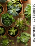 Many Different Echeverias On...