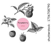 raspberry fruit botanical... | Shutterstock .eps vector #1756708790