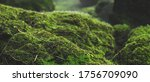 Pattern Green Moss Grown Up...