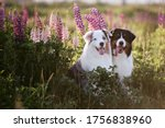 Two Cute Dogs Are Sitting On A...
