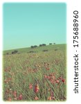 Small photo of A wild red poppy field with trees, hill and turquoise sky behind on a bright Summer day. Cross-processed for an Instagram-esque, retro feel. Soft white frame added for appearance of old photograph.