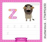 Letter Z Lowercase Cute...