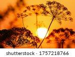 Sunset Grass View. Sunset Grass ...