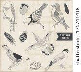 Calligraphic Hand Drawn Birds...