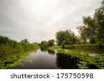 landscape with waterline from ... | Shutterstock . vector #175750598
