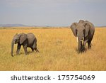a baby african elephant with... | Shutterstock . vector #175754069