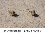 Two Little Sparrows On The...