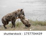 National Park  Kenya  Starving...