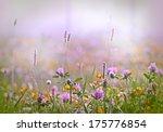 Flowering Clover   Red Clover