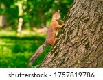 Squirrel In The Park ...