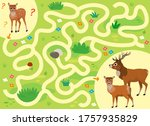 Help The Little Lost Fawn Find...