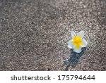 White And Yellow Frangipani...