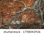 Tree Roots Entwined The Brick...