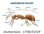 ant anatomical structure vector ... | Shutterstock .eps vector #1758151529