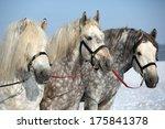 Portrait Of A Three Big Horse