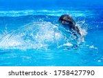 Dolphin Swim In Water Scene....