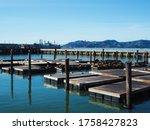 Pier 39 Against San Francisco...