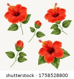 set of realistic beautiful... | Shutterstock .eps vector #1758528800