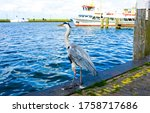 Grey heron on river pier. grey...