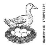 Vector Illustration Of A Duck...