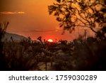 Desert Landscape Sunset In...