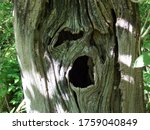 Face And Eye In The Trees